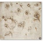 Estudio de flores - VINCI, Leonardo da
