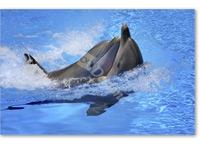 Delfines - Casha, Kevin