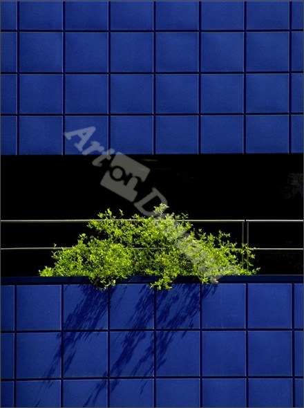 TM Verde sobre Azul - Mayral, Tomás